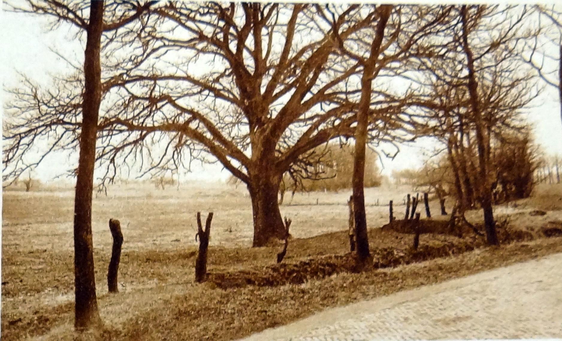 het Noorden in Woord en Beeld 21 maart 1930 eik Ellersinghuizen2